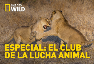 Especial El club de la lucha animal