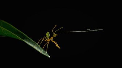 Australia: fauna letal