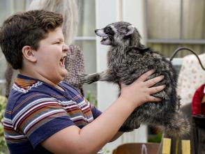 El joven Sheldon - Carbono 14 y un mapache disecado