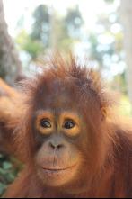 Escuela de orangutanes