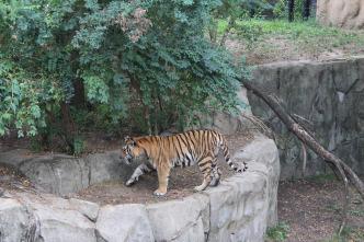 Los secretos del zoo