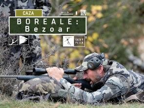 Boreale, vivencias de un guía de caza - Bezoar