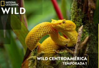 Centroamérica salvaje con Nigel Marven - Costa Rica