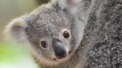 Animales Bebé del Mundo - Australia y Nueva Zelanda