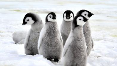 Animales Bebé del Mundo - Regiones polares