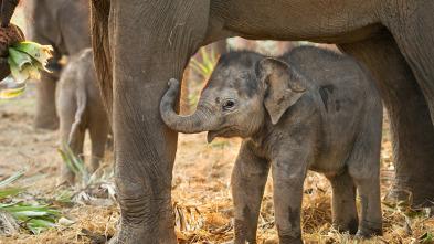Animales Bebé del Mundo - Sudeste asiático