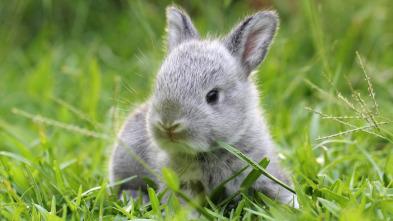 Animales bebé y sus amigos - Primavera