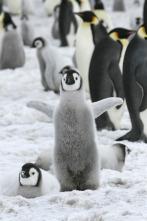 Animales bebé y sus amigos