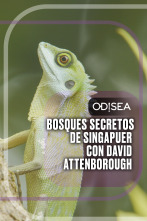 Bosques secretos de Singapur con David Attenborough