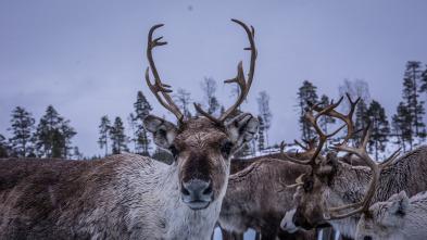 Especial Wild Escandinavia