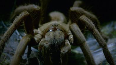 Australia: fauna letal - Bosques mortales