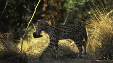 Animales: encuentros épicos - Grandes y pequeños depredadores