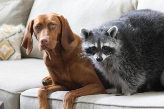 Animales: amigos increíbles