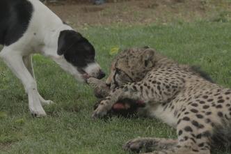 Animales: amigos increíbles - Compañeros inseparables