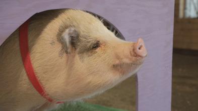 Animales: amigos increíbles - Al rescate