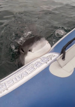Animales: encuentros épicos - Aventuras acuáticas