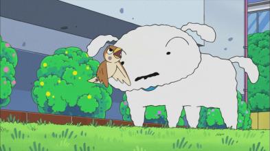Shin Chan - Boo-Chan es muy peculiar / El dentista da mucho miedo / Nevado adopta un pajarito