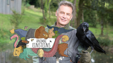 Animal Einsteins