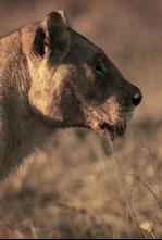 Hermanos leones: de cachorros a reyes