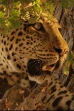 Cazadores de África - Los juicios de Olimba