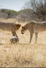 Animales juguetones - El poder del juego