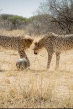 Animales juguetones - Las reglas del juego