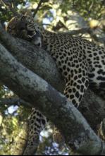 Animales: encuentros épicos - Instintos maternales