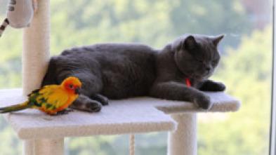 Animales: amigos increíbles - Amigos en apuros