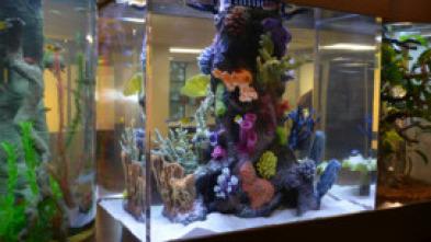 Acuarios XXL - Bill Engvall: ¡Aquí tienes tu acuario!