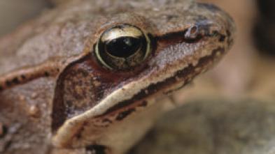 Curiosidades del mundo animal: la guía definitiva - Mapaches y pulpos