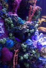 Acuarios XXL - Como pez fuera del agua