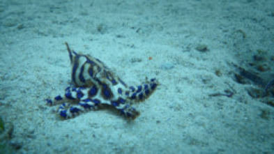 Australia: fauna letal - Océanos