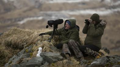 Alaska, última frontera - El ataque del depredador