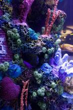 Acuarios XXL - Nick Carter quiere su acuario así