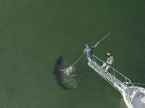 Tiburones malignos