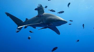 Ataque de tiburón: La historia de Paige Winter