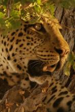 Cazadores de África - Los reyes Nsefu