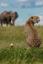 El linaje de los depredadores