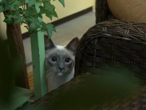 CSI de la naturaleza - El ladrón de gatos