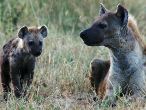 Creciendo en África - Lecciones de caza
