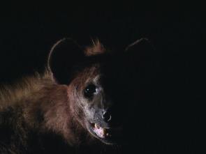 El reino letal de África - Praderas