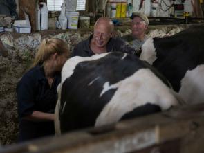 El increíble doctor Pol - Cómo conocí a vuestra vaca