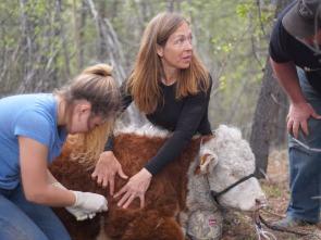 Una veterinaria todoterreno