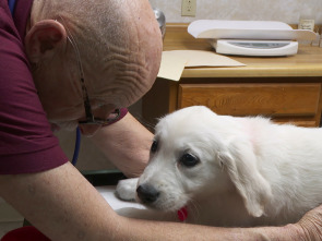 El increíble doctor Pol - Cachorritos temblorosos