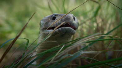 Australia: fauna letal - Desiertos