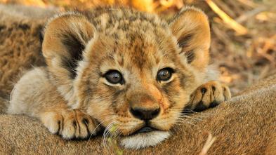 Animales Bebé del Mundo - Regreso a África