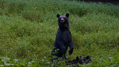 Depredadores de los Cárpatos - El reino del oso