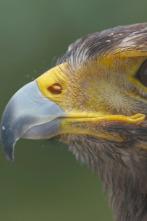 Ataque y defensa - A vista de pájaro