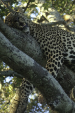 Animales: encuentros épicos - Cazadores salvajes
