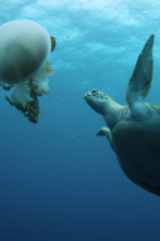La Gran Barrera de Coral: tesoro vivo